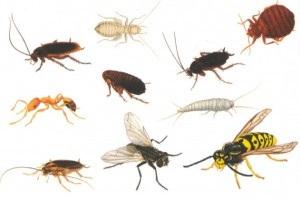insetos2 - Como ficar livre de insetos