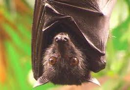 Veja qual é a alimentação dos morcegos