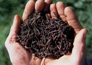 porque as minhocas são importantes para o solo?