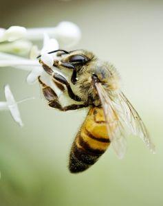 Reprodução das abelhas: como elas se reproduzem?