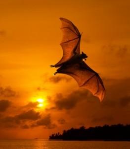 Como os morcegos se orientam?