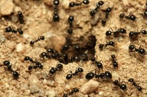 Como é o formato de um formigueiro por dentro