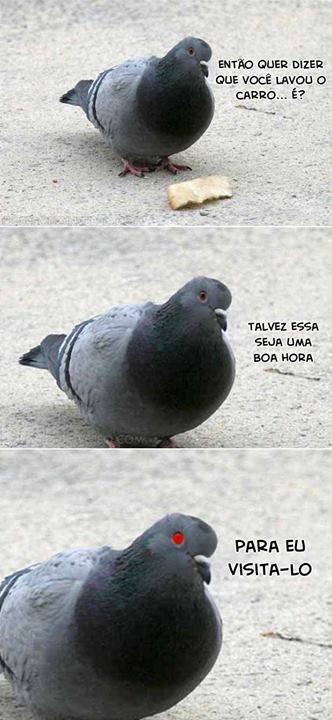 meme pombo
