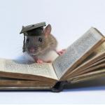 A inteligência dos ratos