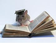 Rato com chapéu de formatura lendo livro