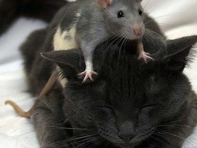 2018 08 24 - Eliminar Ratos – Vantagens e Desvantagens